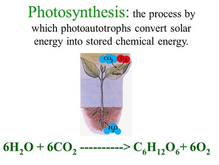Photosynthesis: the process by which photoautotrophs convert solar energy into stored chemical energy. 6H 2 O + 6CO 2 ----------> C 6 H 12 O 6 + 6O 2.