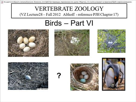 Birds – Part VI VERTEBRATE ZOOLOGY (VZ Lecture28 – Fall 2012 Althoff - reference PJH Chapter 17) Bill Horn ?