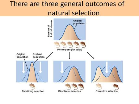 There are three general outcomes of natural selection Number of individuals Original population Phenotypes (fur color) Original population Evolved population.