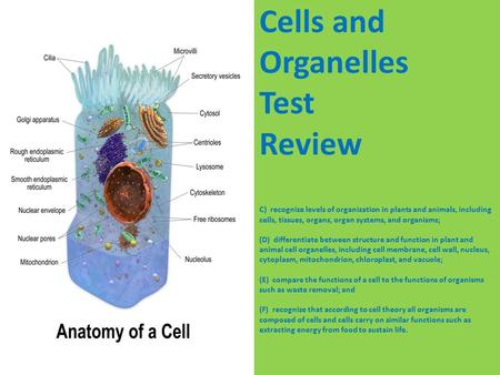 Cells and Organelles Test Review C)  recognize levels of organization in plants and animals, including cells, tissues, organs, organ systems, and organisms;