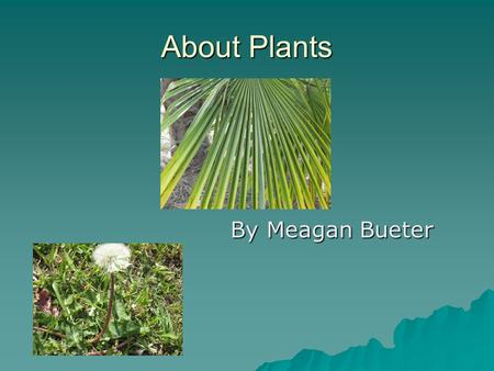 About Plants By Meagan Bueter By Meagan Bueter. Parts of a plant The flower is the part of the plant that attracts insects. It also makes the seeds. The.