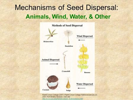 Mechanisms of Seed Dispersal: Pacific Union College (2007). Pacific Union College. Retrieved January 23, 2007, from Botany Glossary Web site: