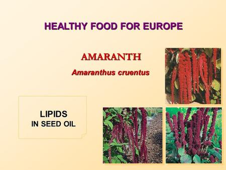 HEALTHY FOOD FOR EUROPE AMARANTH Amaranthus cruentus LIPIDS IN SEED OIL.