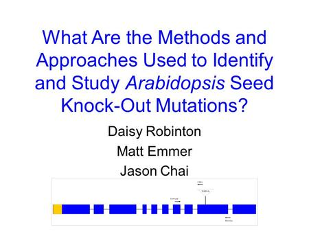 What Are the Methods and Approaches Used to Identify and Study Arabidopsis Seed Knock-Out Mutations? Daisy Robinton Matt Emmer Jason Chai.