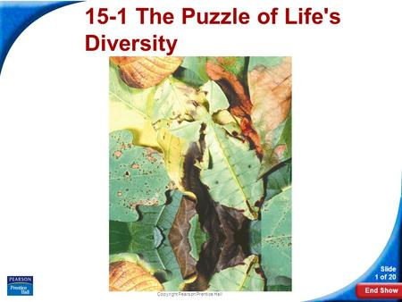 End Show Slide 1 of 20 Copyright Pearson Prentice Hall 15-1 The Puzzle of Life's Diversity.