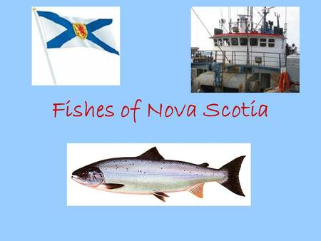 Fishes of Nova Scotia. The largest fish is the whale shark, which grows to more than 50 feet in length. The smallest fish is the goby. It is about half.