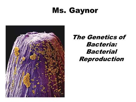 The Genetics of Bacteria: Bacterial Reproduction