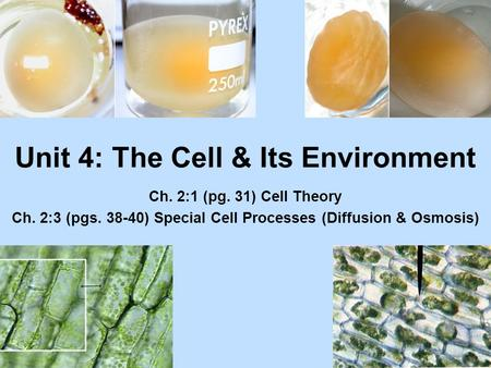 Unit 4: The Cell & Its Environment Ch. 2:1 (pg. 31) Cell Theory Ch. 2:3 (pgs. 38-40) Special Cell Processes (Diffusion & Osmosis)