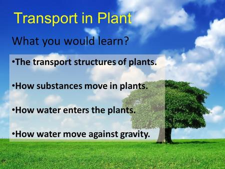 transport in plants essay Osmosis, diffusion and cell transport types of transport there are 3 types of transport in cells: 1 passive transport: does not use the in plant cells.