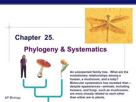AP Biology 1/19/2016 Chapter 25. Phylogeny & Systematics An unexpected family tree. What are the evolutionary relationships among a human, a mushroom,