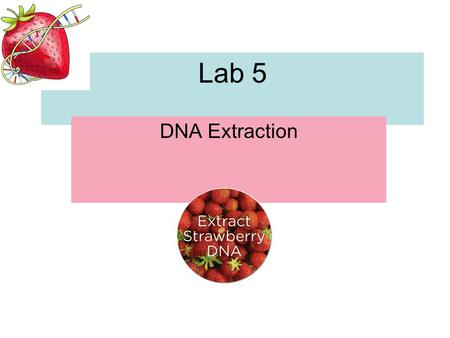 Lab 5 DNA Extraction.