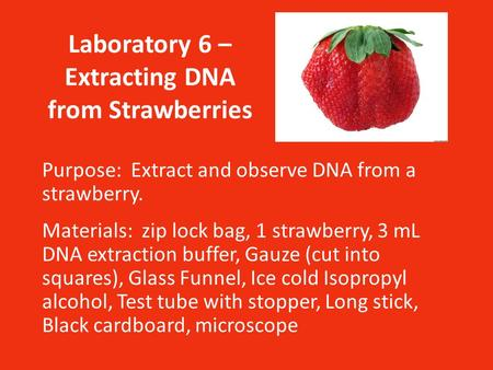 Laboratory 6 – Extracting DNA from Strawberries Purpose: Extract and observe DNA from a strawberry. Materials: zip lock bag, 1 strawberry, 3 mL DNA extraction.