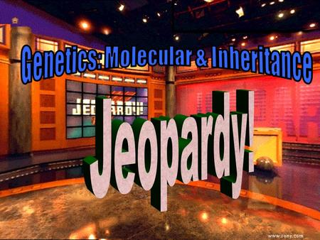 Genetics Jeopardy 100 200 100 200 300 400 500 300 400 500 100 200 300 400 500 100 200 300 400 500 100 200 300 400 500 Terms Central Dogma MutationsStructuresMolecular.