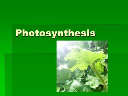 Photosynthesis. How is energy being obtained by the organisms in this picture?
