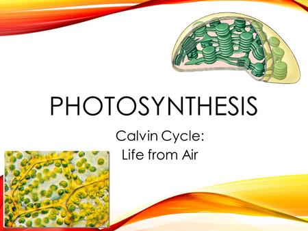 PHOTOSYNTHESIS Calvin Cycle: Life from Air THE CALVIN CYCLE Whoops! Wrong Calvin…