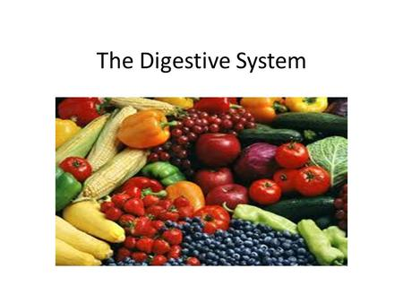 The Digestive System. The Digestive Tract The Mouth The Stomach The Small Intestine The Oesophagus The Large Intestine.