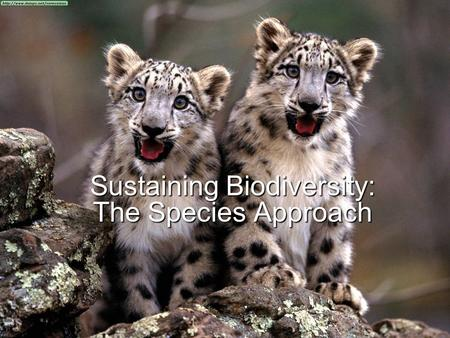 Sustaining Biodiversity: The Species Approach. SPECIES EXTINCTION  Species can become extinct: Locally: A species is no longer found in an area it once.