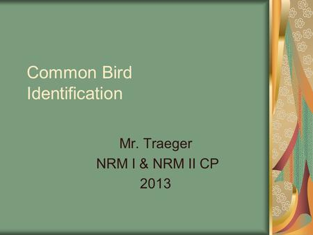 Common Bird Identification Mr. Traeger NRM I & NRM II CP 2013.