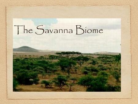 The Savanna Biome.