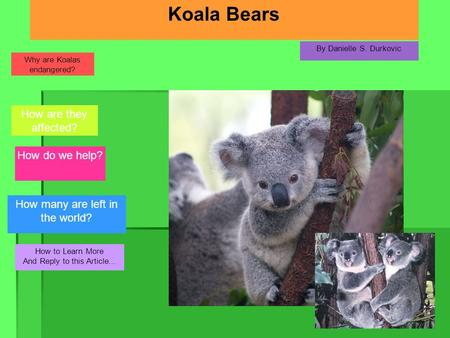 Koala Bears By Danielle S. Durkovic How to Learn More And Reply to this Article... How many are left in the world? How do we help? How are they affected?