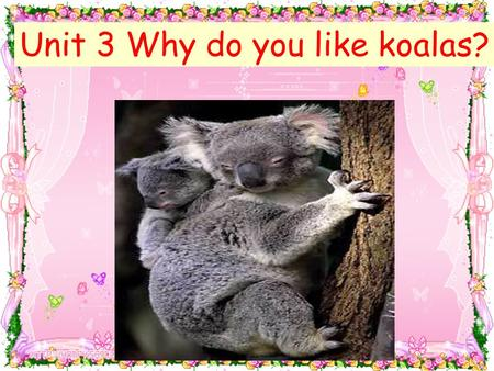 Unit 3 Why do you like koalas? 脑筋急转弯 1. Why are dogs afraid to sunbath ( 日光浴 ) ? Because they don't want to be hot-dog. 2.Why do lions eat raw ( 生的)