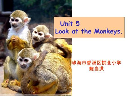 Unit 5 Look at the Monkeys. 珠海市香洲区拱北小学 鲍当洪 elephant monkey fish kangaroocatfrog.
