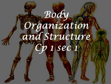 Body Organization and Structure Cp 1 sec 1. HOMEOSTASIS The human body's maintenance of a stable internal environment. If homeostasis is interrupted,