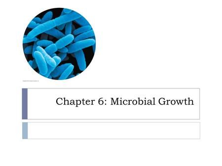 Chapter 6: Microbial Growth. How do bacteria grow?  Not in size  Increase in population size  One cell divides into 2 new cells – binary fission.