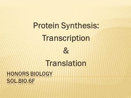 Protein Synthesis: Transcription & Translation.