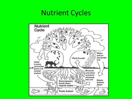 Nutrient Cycles. Learning Objectives Understand the role of organic breakdown in nutrient cycles Be able to draw a diagram of the carbon cycle Understand.
