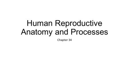 Human Reproductive Anatomy and Processes Chapter 34.