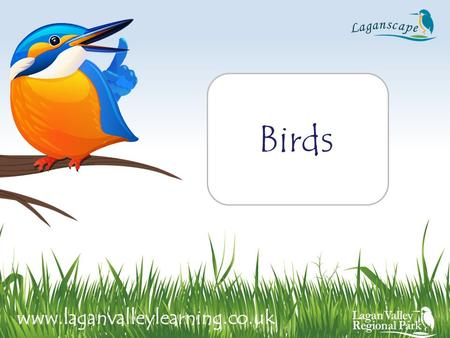 Birds www.laganvalleylearning.co.uk. Habitat: Found almost everywhere, gardens, woodlands, countryside and by the coast Food: Worms, insects, fruits and.
