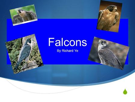 Falcons By Richard Ye Introduction  Falcons are birds. The falcons are the fastest bird on Earth. They can dive up to 200 miles from the sky. Falcons.