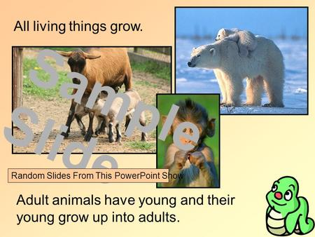 All living things grow. Adult animals have young and their young grow up into adults. Sample Slide Random Slides From This PowerPoint Show.