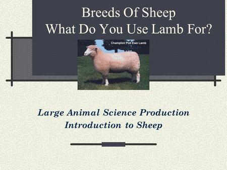 Breeds Of Sheep What Do You Use Lamb For? Large Animal Science Production Introduction to Sheep.