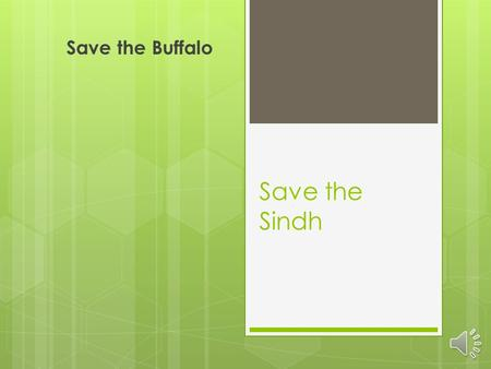 Save the Sindh Save the Buffalo The Sindh Region.
