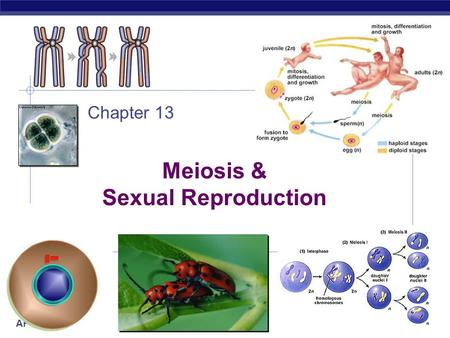 AP Biology 2007-2008 Meiosis & Sexual Reproduction Chapter 13.