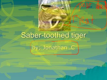 Saber-toothed tiger by; Jonathan.C. weight  Saber-toothed tigers weigh 130 lbs.  Baby saber-toothed tigers are 70 lbs.  Skeleton weighs 30 lbs.  Scull.