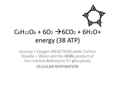 C 6 H 12 O 6 + 6O 2  6CO 2 + 6H 2 O+ energy (38 ATP) Glucose + Oxygen (REACTION) yields Carbon Dioxide + Water and the GOAL product of the reaction Adenosine.
