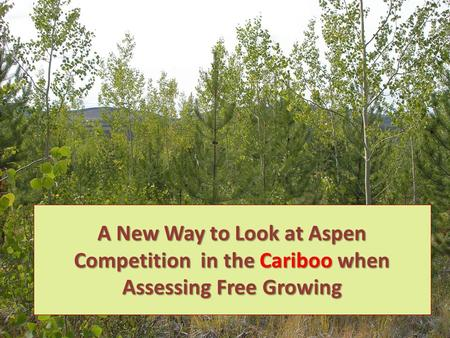 A New Way to Look at Aspen Competition in the Cariboo when Assessing Free Growing 1.
