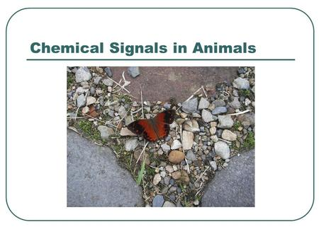 Chemical Signals in Animals. Animals Have Two Systems of Internal Communication and Regulation. Nervous System Movement of body parts as a quick response.