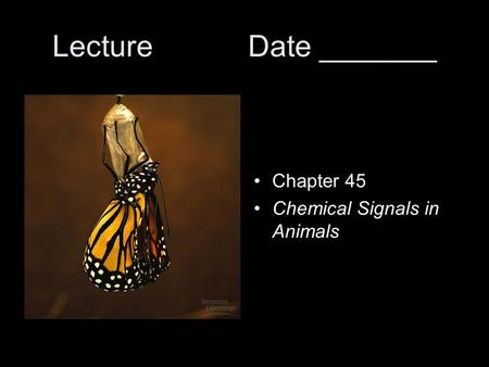 LectureDate _______ Chapter 45 Chemical Signals in Animals.