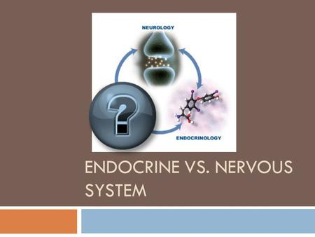 ENDOCRINE VS. NERVOUS SYSTEM Function?  Coordinate body functions (Both)  Often work together.