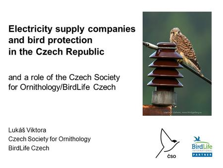 Electricity supply companies and bird protection in the Czech Republic and a role of the Czech Society for Ornithology/BirdLife Czech Lukáš Viktora Czech.