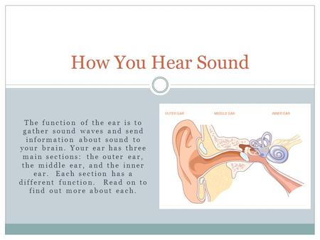 How You Hear Sound The function of the ear is to gather sound waves and send information about sound to your brain. Your ear has three main sections: the.
