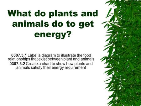What do plants and animals do to get energy? 0307.3.1 Label a diagram to illustrate the food relationships that exist between plant and animals 0307.3.2.