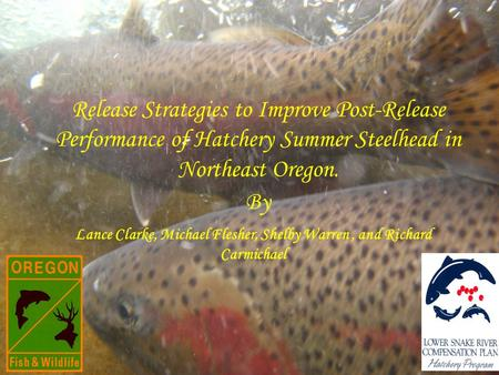 Release Strategies to Improve Post-Release Performance of Hatchery Summer Steelhead in Northeast Oregon. Lance Clarke, Michael Flesher, Shelby Warren,