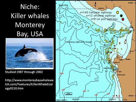 Niche: Killer whales Monterey Bay, USA Studied 1987 through 2002  tch.com/Features/KillerWhaleEcol ogy0210.htm.