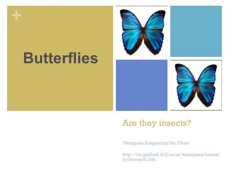 + Are they insects? Webquest Adapted by Ms. Chew  ly/monarch.htm Butterflies.