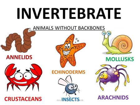 INVERTEBRATE ANIMALS WITHOUT BACKBONES ANNELIDS ECHINODERMS CRUSTACEANS INSECTS MOLLUSKS ARACHNIDS Amy Stables TEFL flashcards.